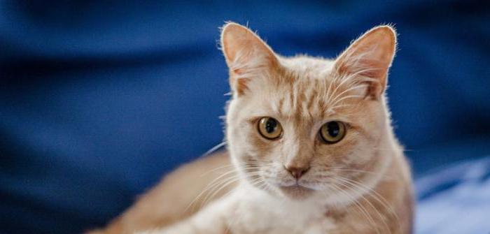 Какой должен быть нос у здоровой кошки сухой