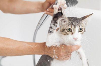 кошку моют под душем