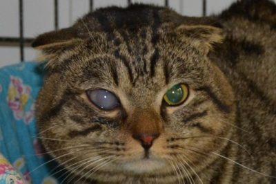 мутный глаз у кота