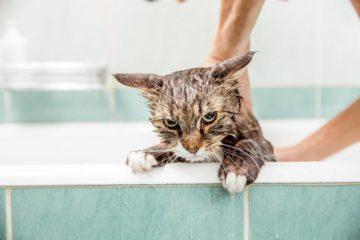 кот в в ванной