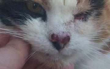 пятна на носу у кошки