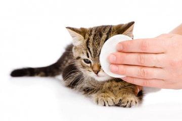 промывка глаз у котенка