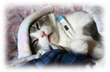 температура у кота