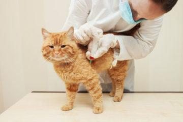 у кошки берут кровь
