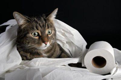 кошка и туалетная бумага