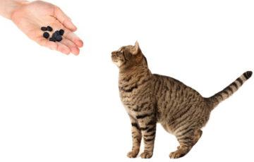 кот и активированный уголь
