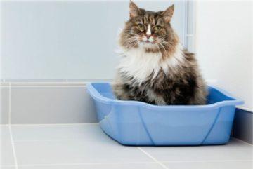 кот в латке