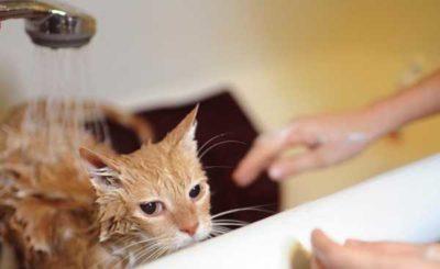 кот в ванне