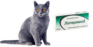 лоперамид кошкам