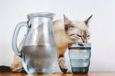 кот пьет воду