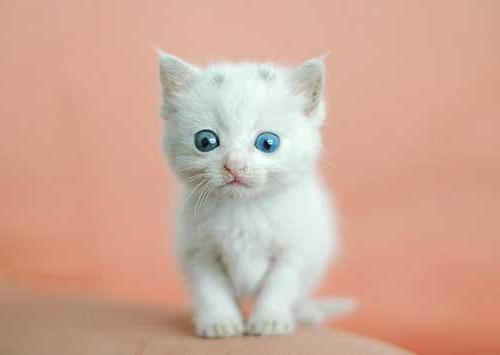 у котенка блохи что делать
