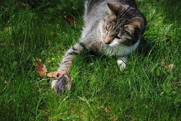 Кошка съела отравленную мышь - что делать
