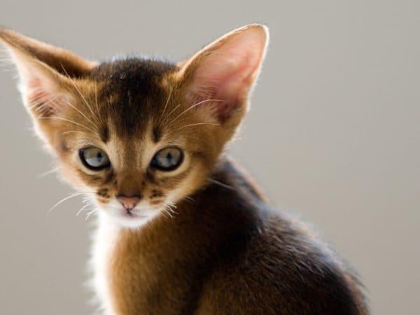 Коту нельзя мочить уши