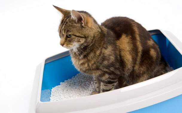Лечение поноса у кошек