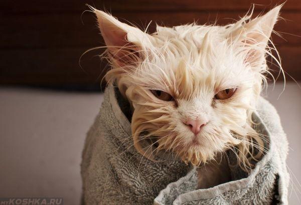 Завернутая в полотенце рыжая кошка после купания