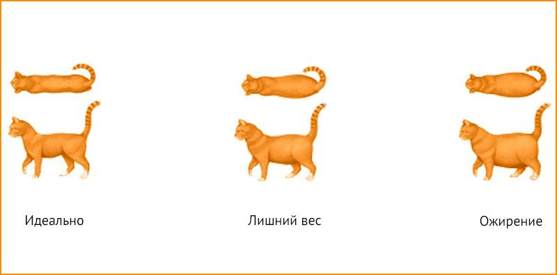 Ожирение у кошек и котов