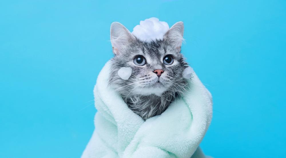Можно ли обойтись без купания кошек